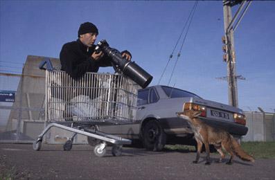 Laurent Geslin, photographe animalier